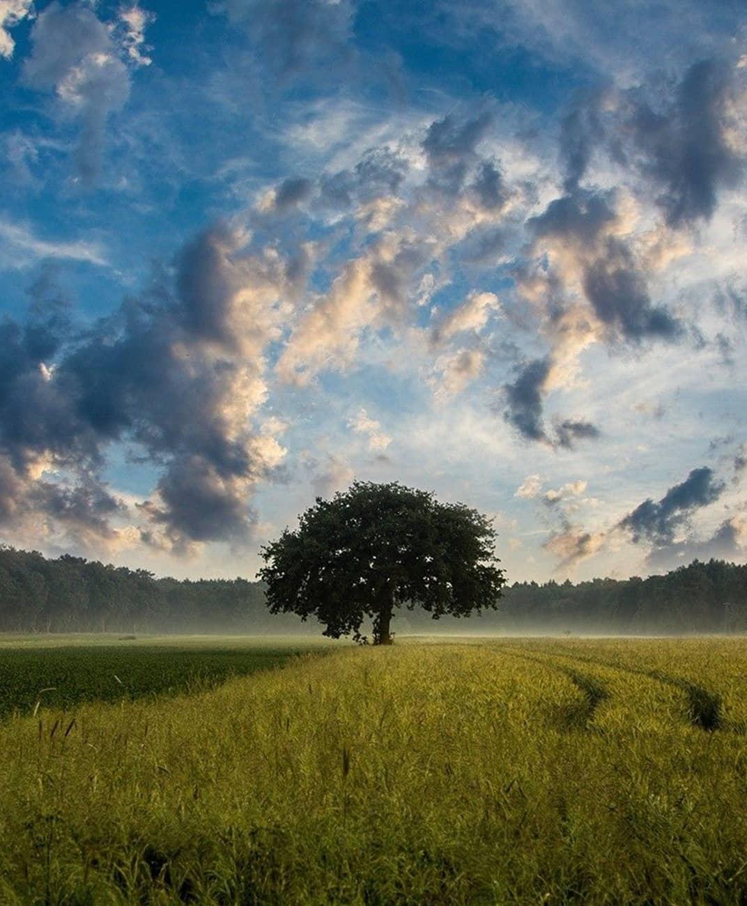 Wisdom Wealth Strategies tree in field
